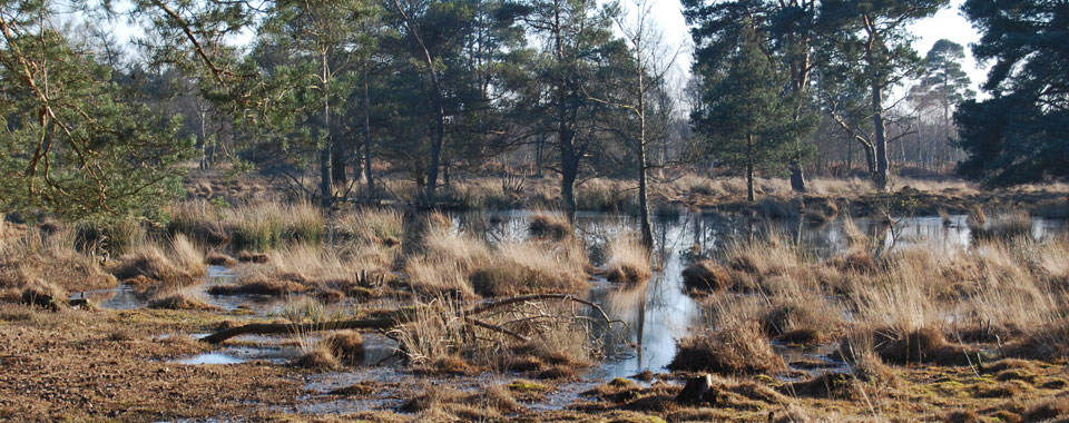 Skipwith Common Marsh