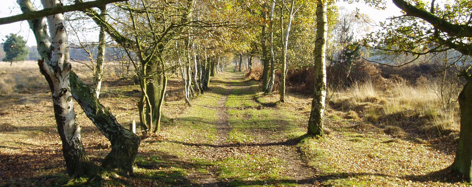 Tree Lined Path on Skipwith Common